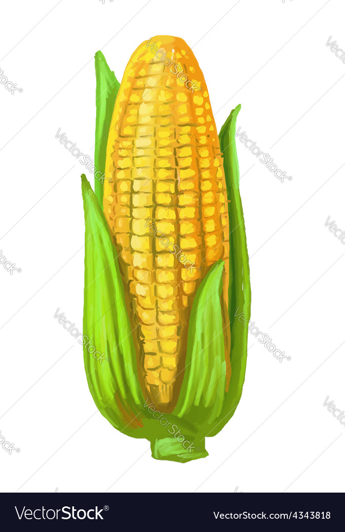 Picture of corn vector | Price: 3 Credit (USD $3)