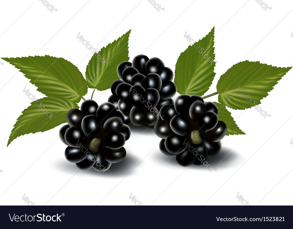 Fresh berries with leaves vector   Price: 1 Credit (USD $1)