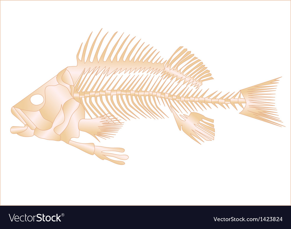 Fish skeleton vector | Price: 1 Credit (USD $1)