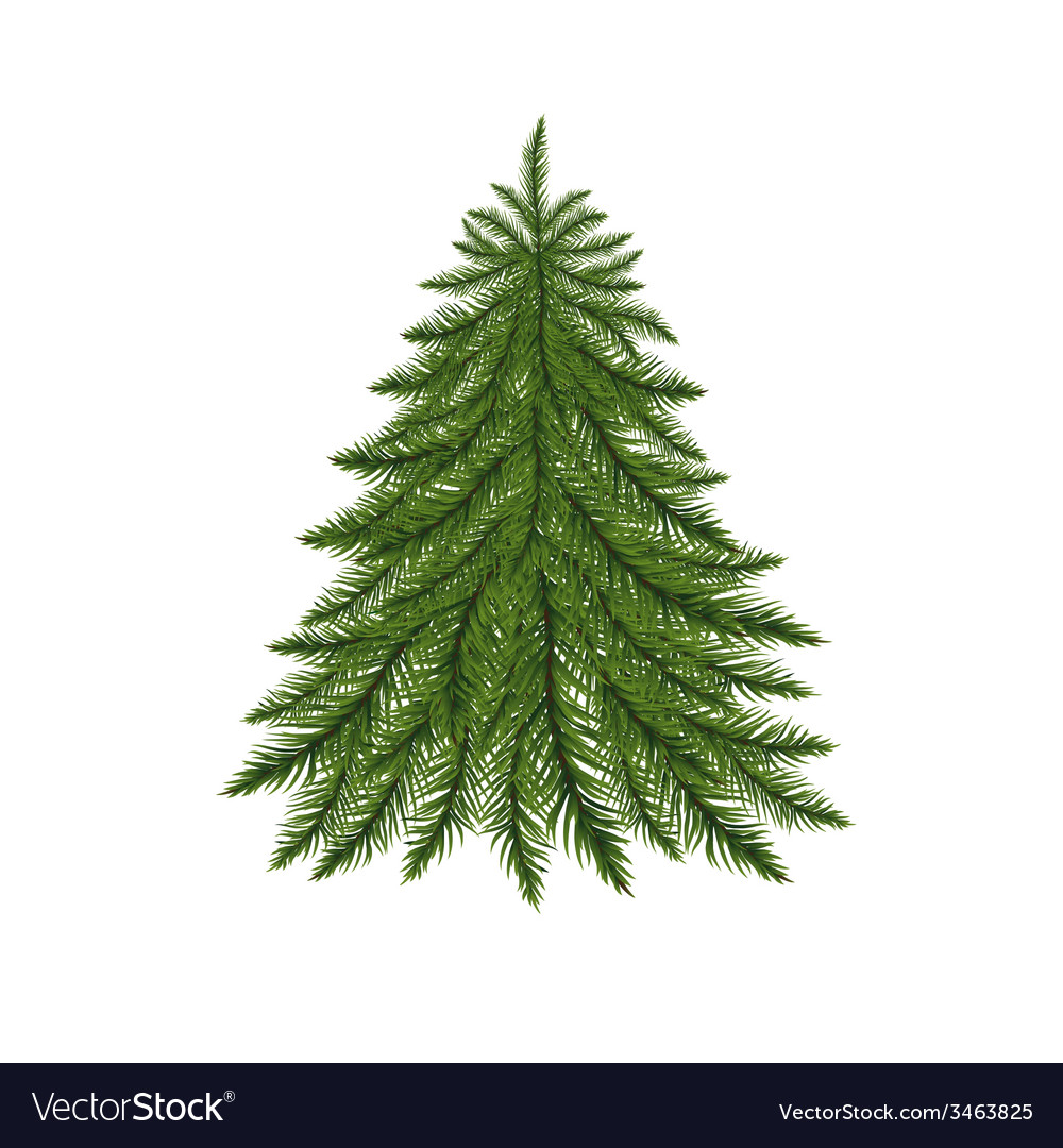 Fir tree isolated on white vector | Price: 1 Credit (USD $1)