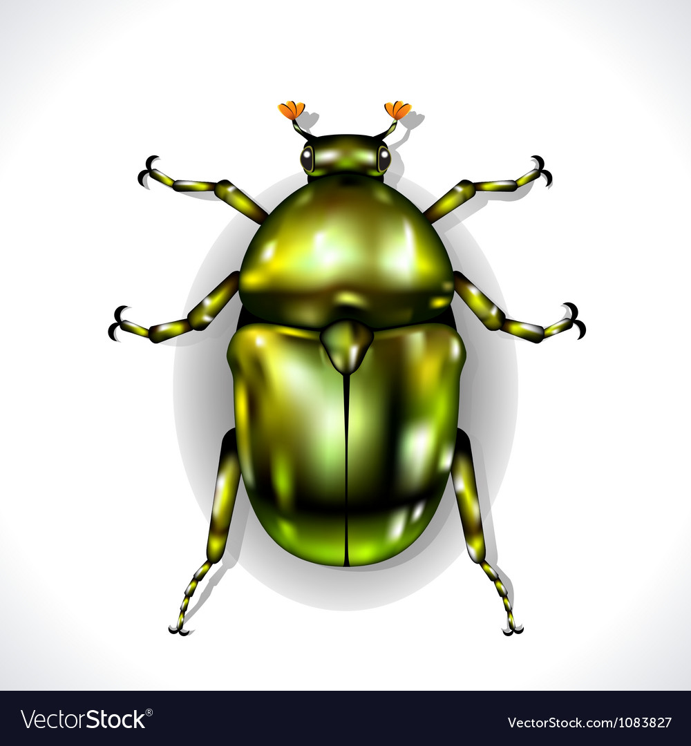 Beetle isolated vector | Price: 3 Credit (USD $3)