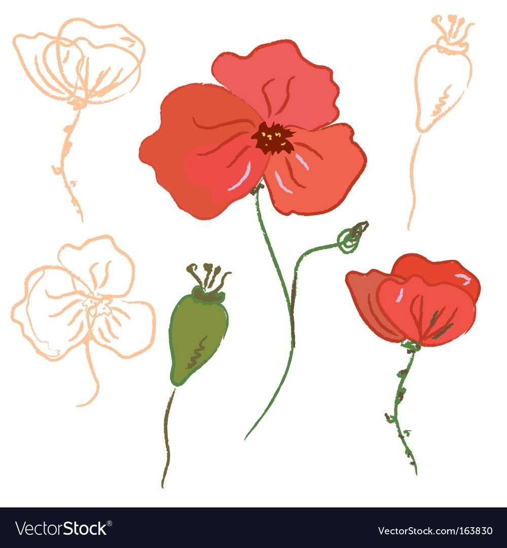 Poppy flowers vector | Price: 1 Credit (USD $1)