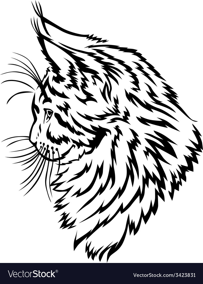 Maine coon kitten vector | Price: 1 Credit (USD $1)