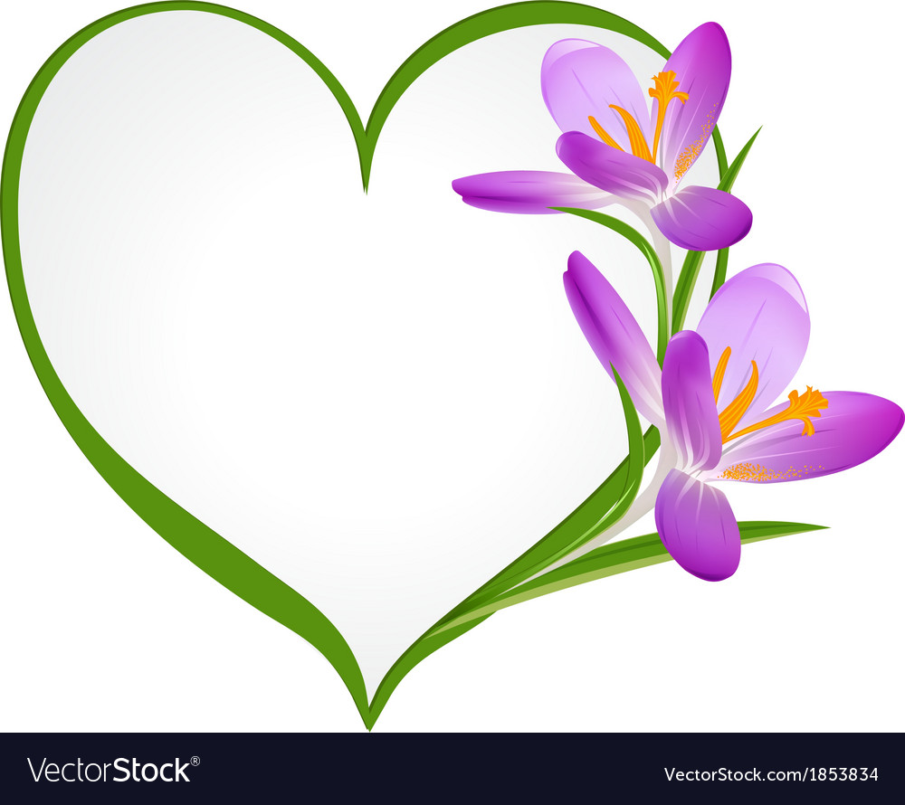 Purple crocus with a frame in the shape of heart vector   Price: 1 Credit (USD $1)