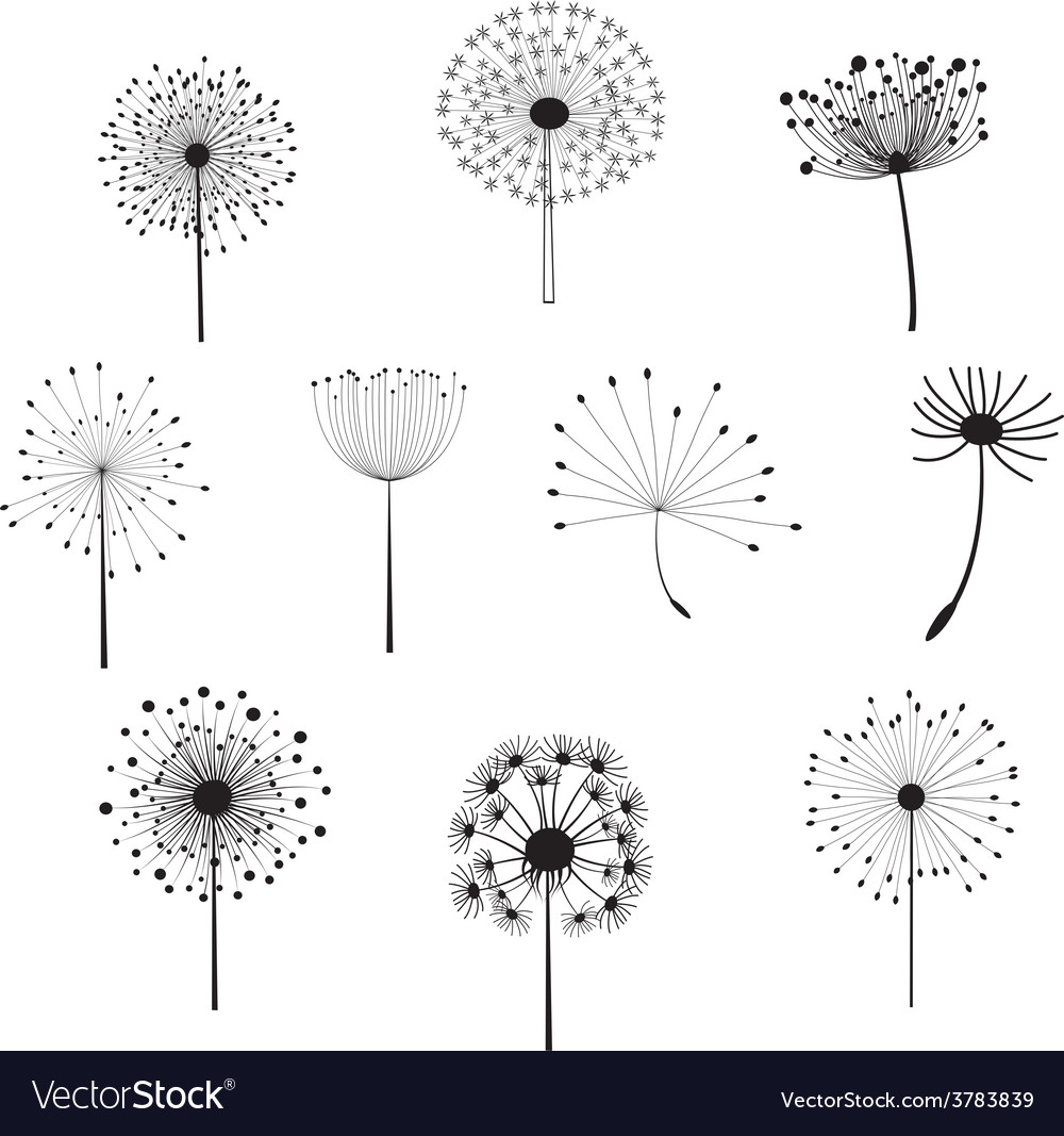 Floral elements with dandelions for design vector | Price: 1 Credit (USD $1)