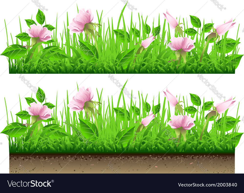 Grass border with flowers isolated on white vector | Price: 1 Credit (USD $1)