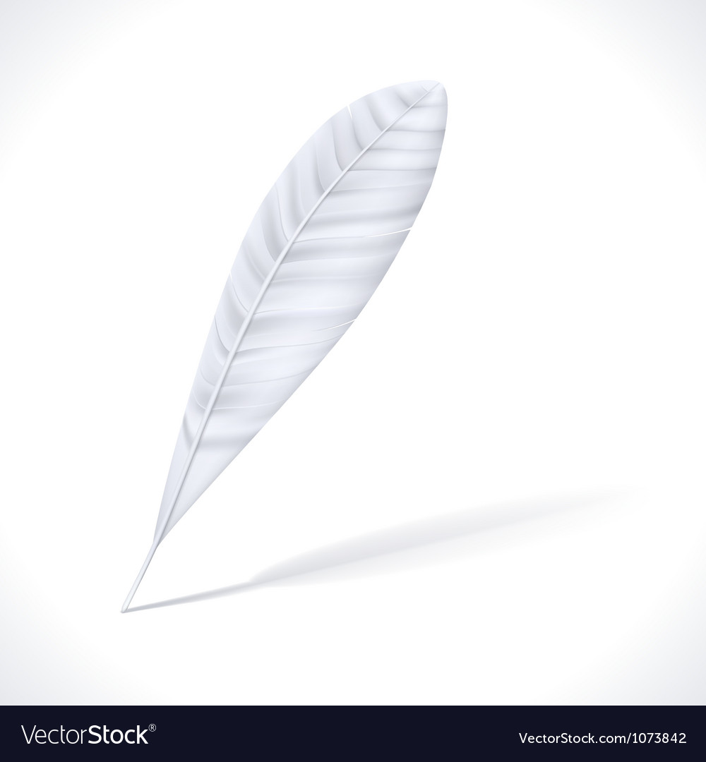 White feather vector | Price: 1 Credit (USD $1)
