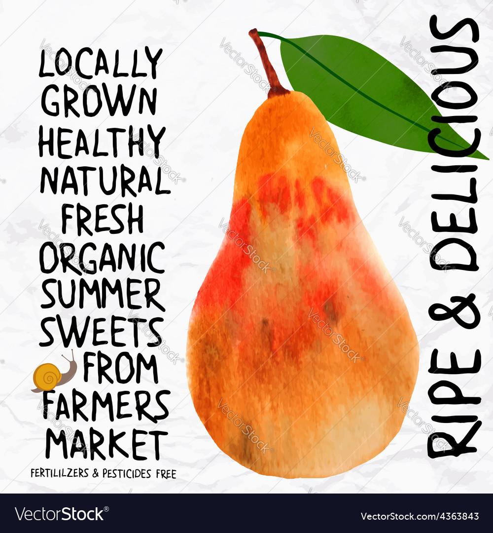Watercolor pear vector