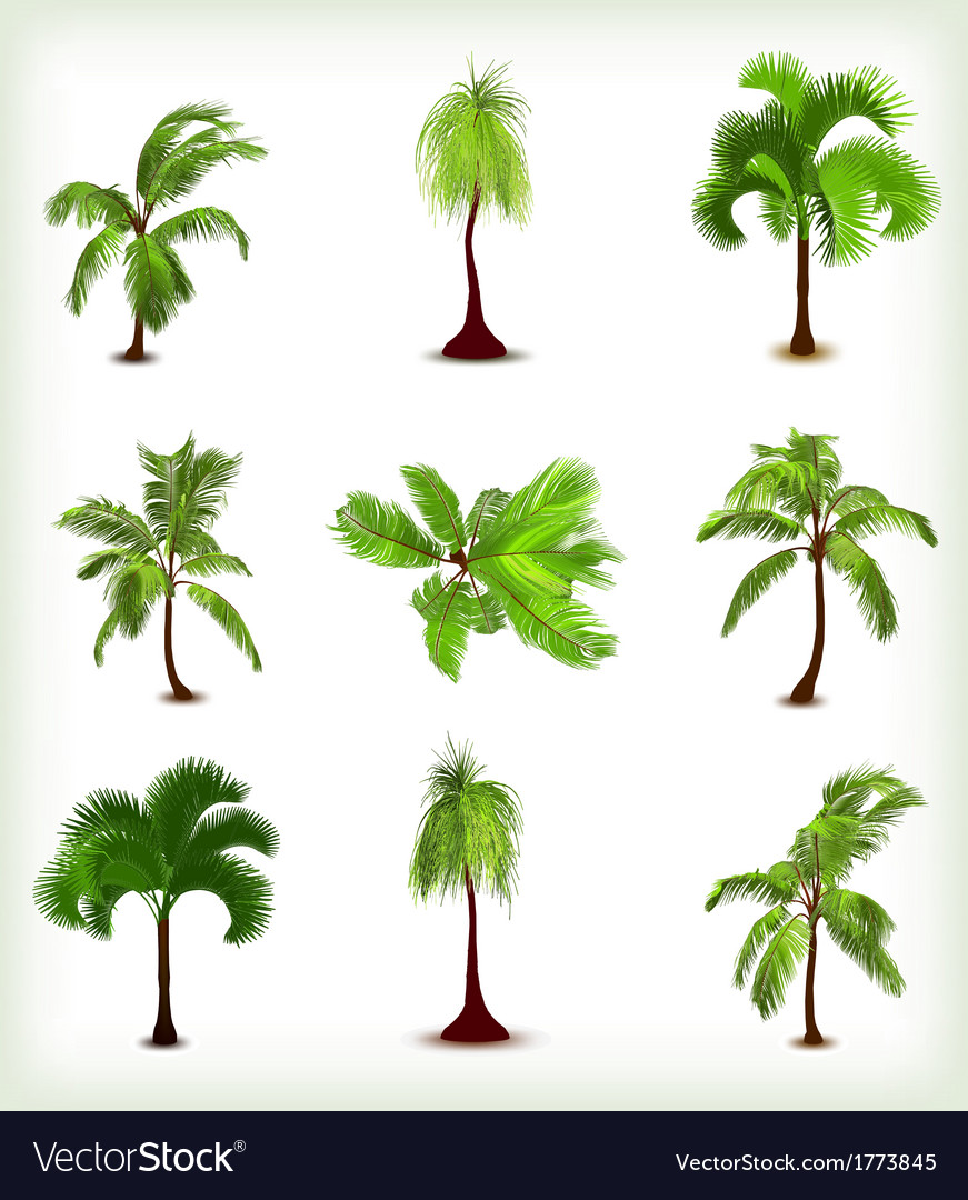 Set of various palm trees vector | Price: 1 Credit (USD $1)