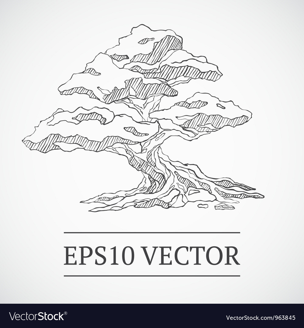 Sketched vintage bonsai tree vector | Price: 1 Credit (USD $1)