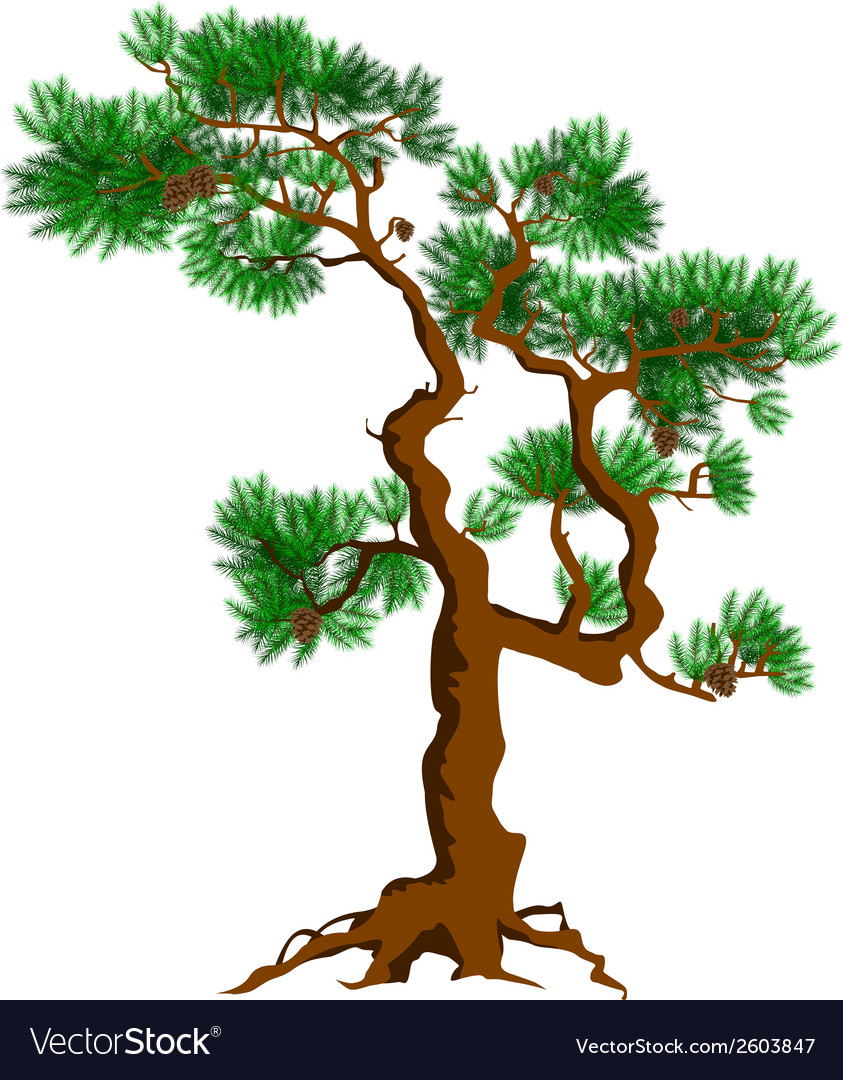 Tree designs vector