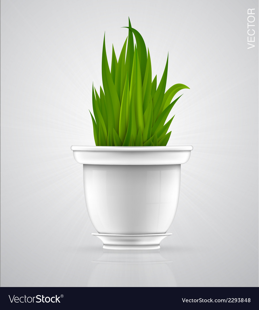 Green sprout flower herb in the pot vector | Price: 1 Credit (USD $1)