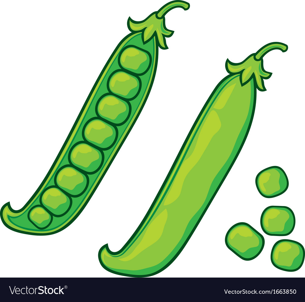Green peas pea pod vector | Price: 1 Credit (USD $1)