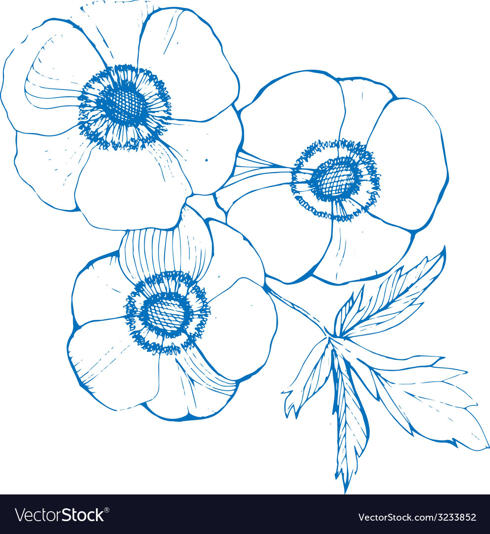 Anemone flowers sketch vector | Price: 1 Credit (USD $1)