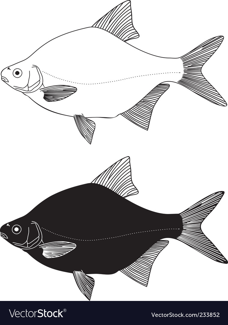 Freshwater fish bream vector | Price: 1 Credit (USD $1)
