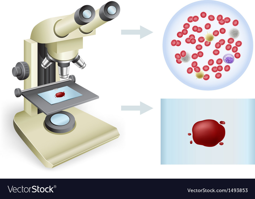 Blood under a microscope vector | Price: 1 Credit (USD $1)