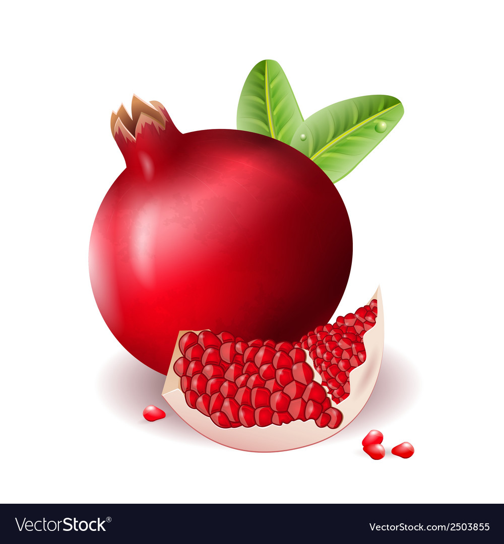 Pomegranate vector | Price: 1 Credit (USD $1)