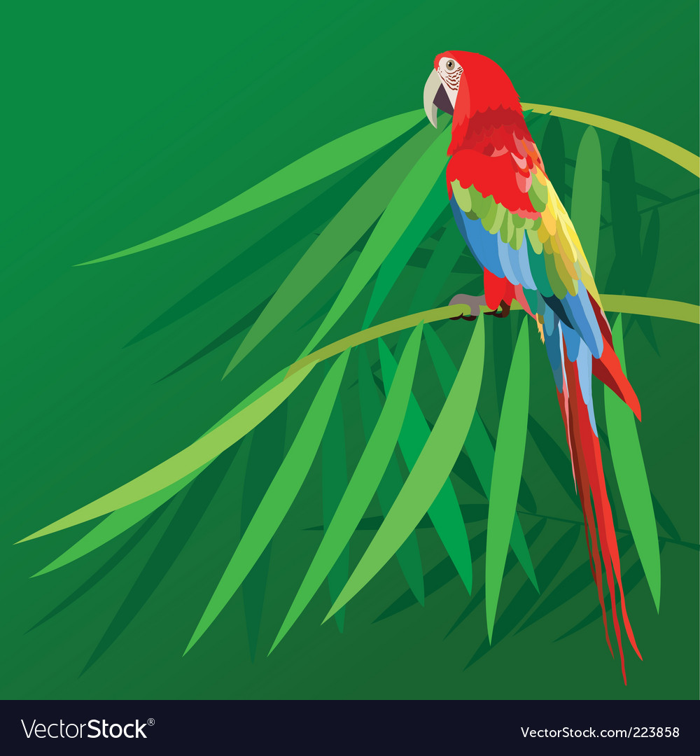Parrot on bamboo vector | Price: 1 Credit (USD $1)