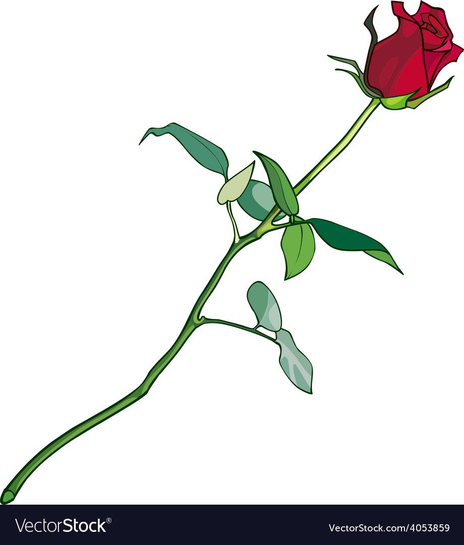 Red rose on a long stalk vector | Price: 3 Credit (USD $3)