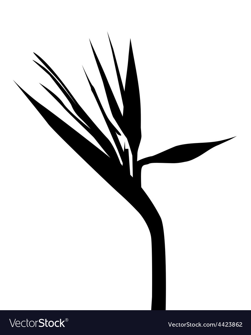 Birds of paradise silhouette vector | Price: 1 Credit (USD $1)