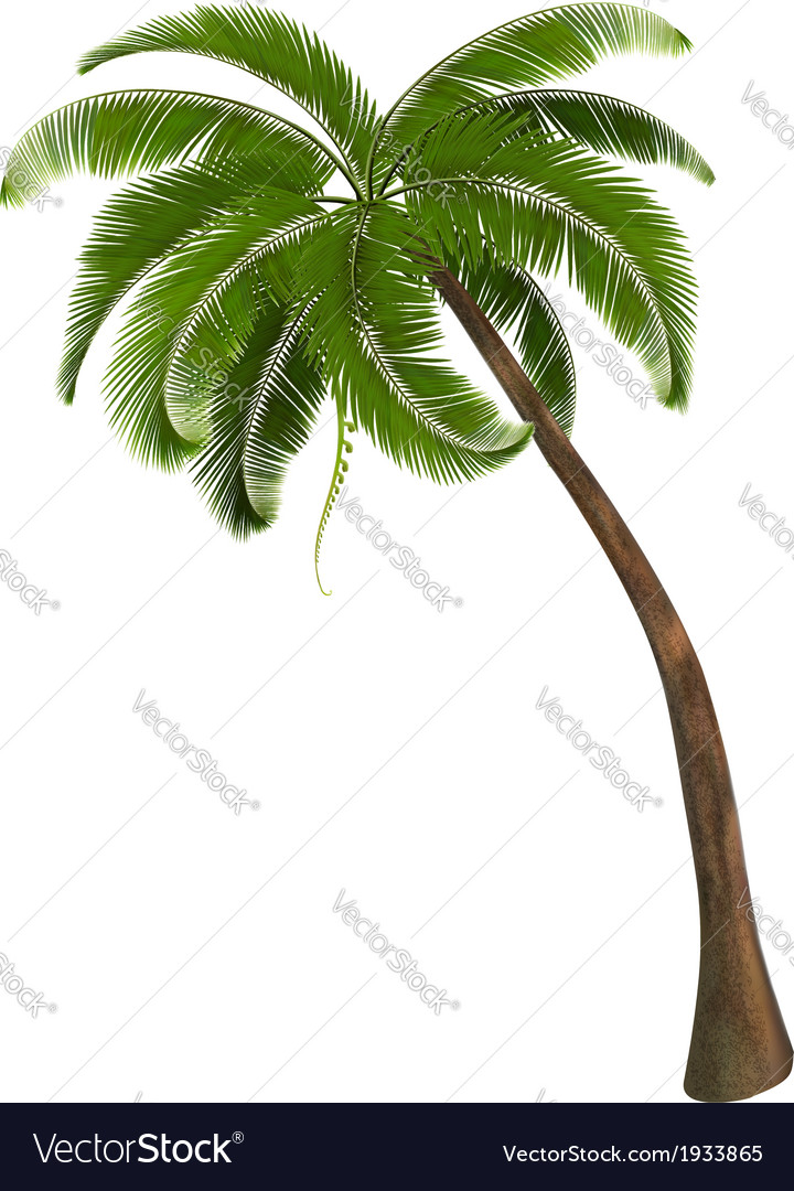 Background with a palm tree vector | Price: 1 Credit (USD $1)