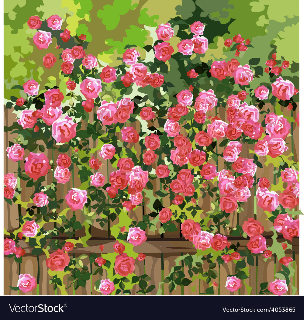 Shrub with pink flowers over a fence vector | Price: 1 Credit (USD $1)