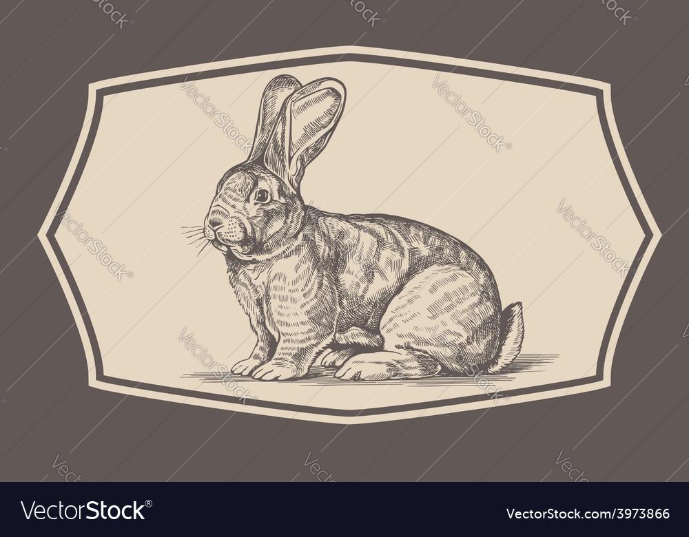 Vintage rabbit emblem vector