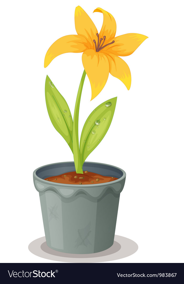 Lily pot plant vector | Price: 1 Credit (USD $1)