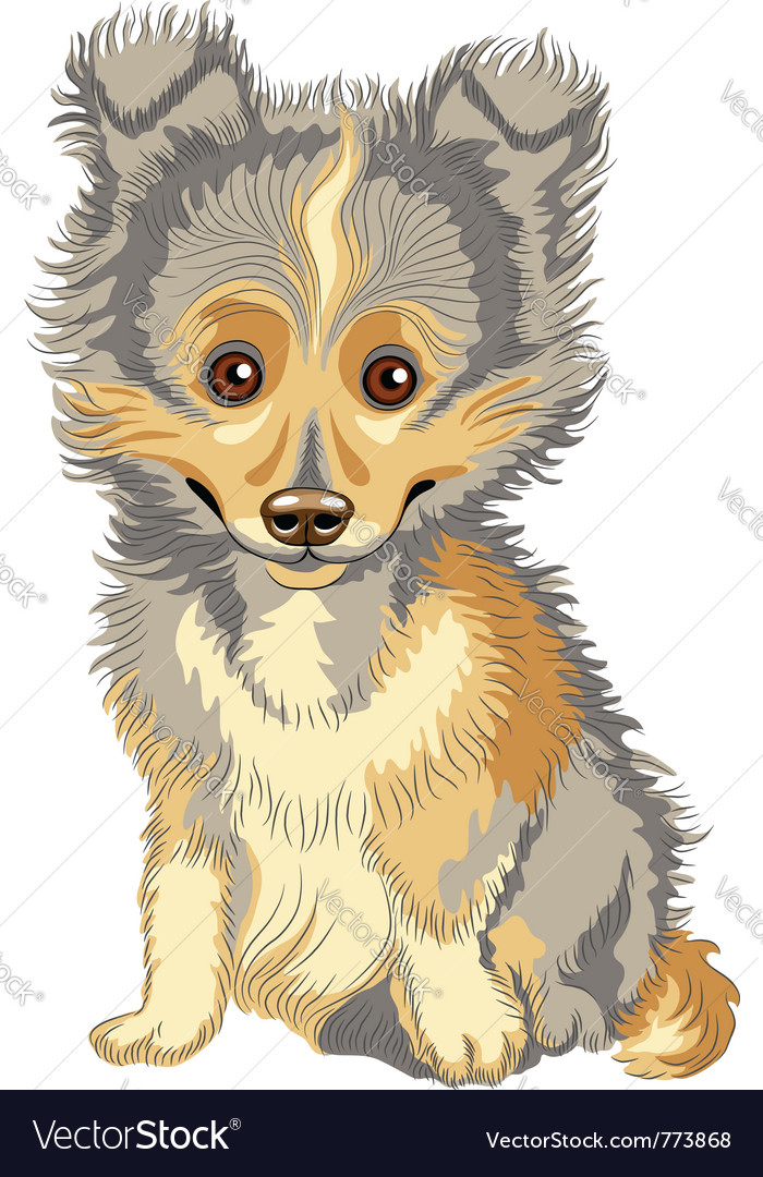 Cute puppy breed shetland vector | Price: 1 Credit (USD $1)