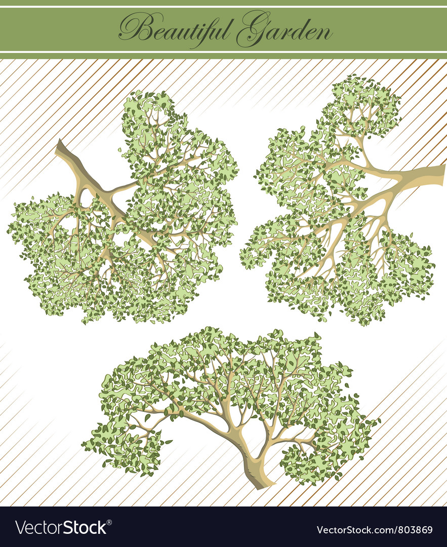 Detailed branches of trees vector | Price: 1 Credit (USD $1)
