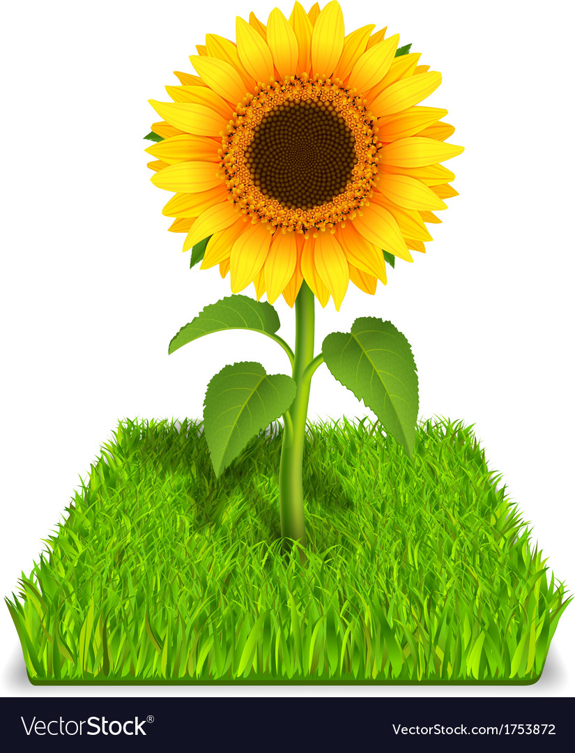 Sunflower in the green grass vector | Price: 1 Credit (USD $1)