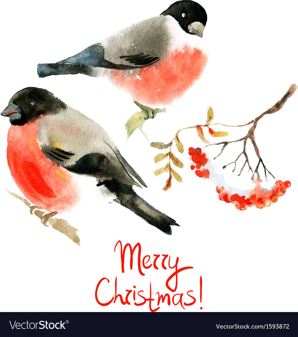 Watercolor bullfinch and ashberry vector | Price: 1 Credit (USD $1)