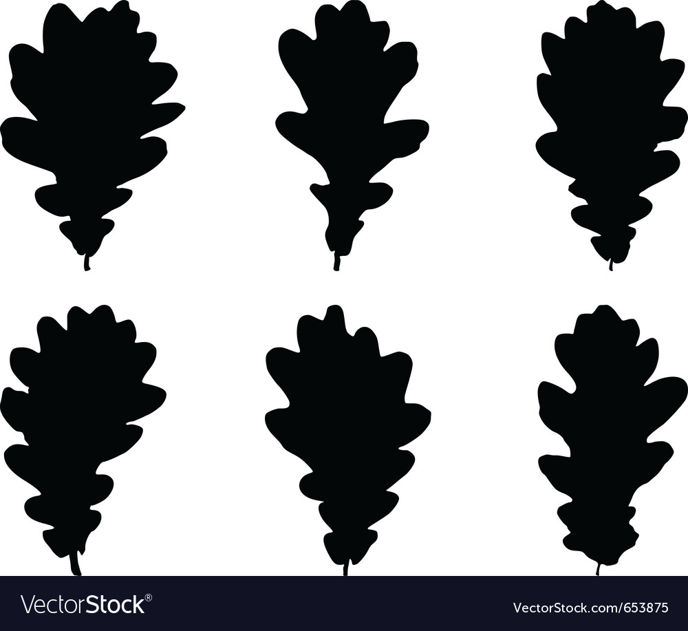 Oak leaves vector | Price: 1 Credit (USD $1)