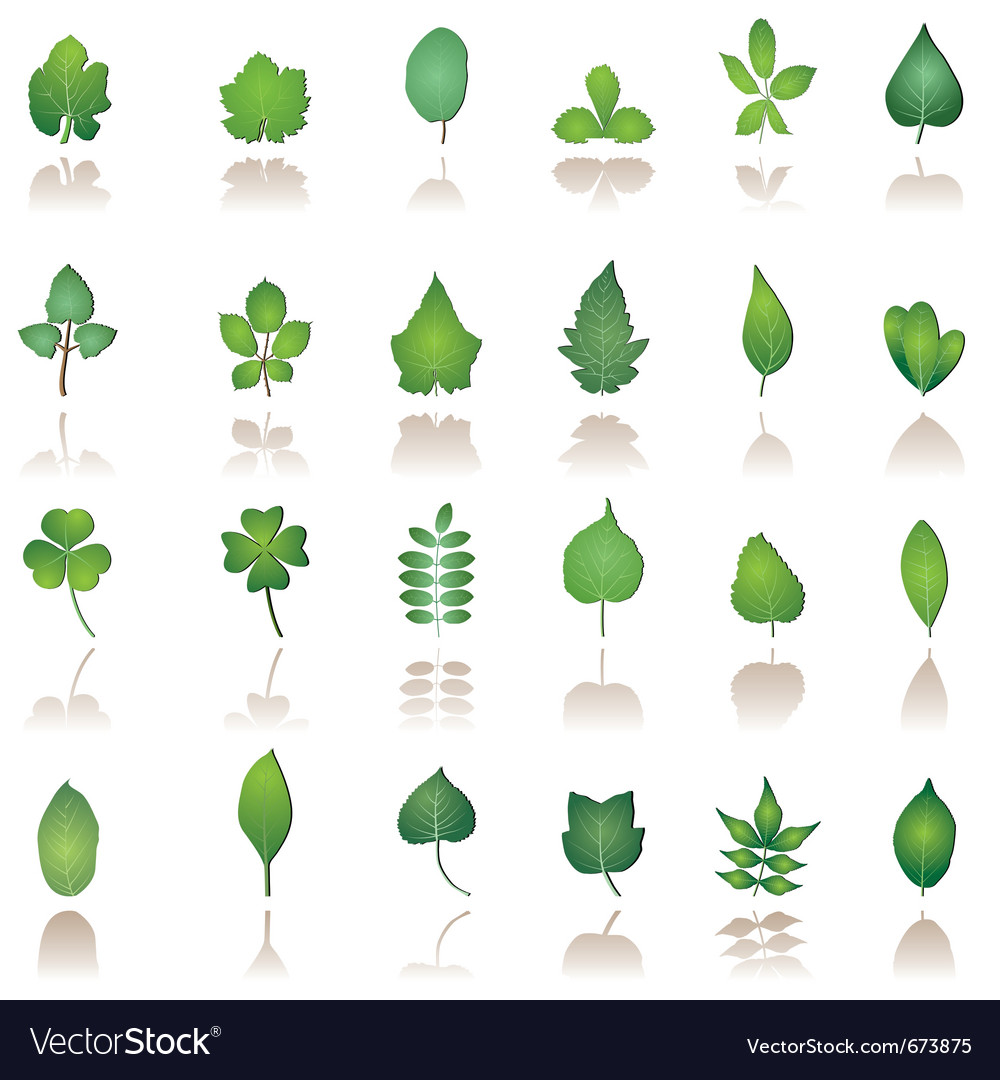 Tree leafs and nature icons vector | Price: 1 Credit (USD $1)