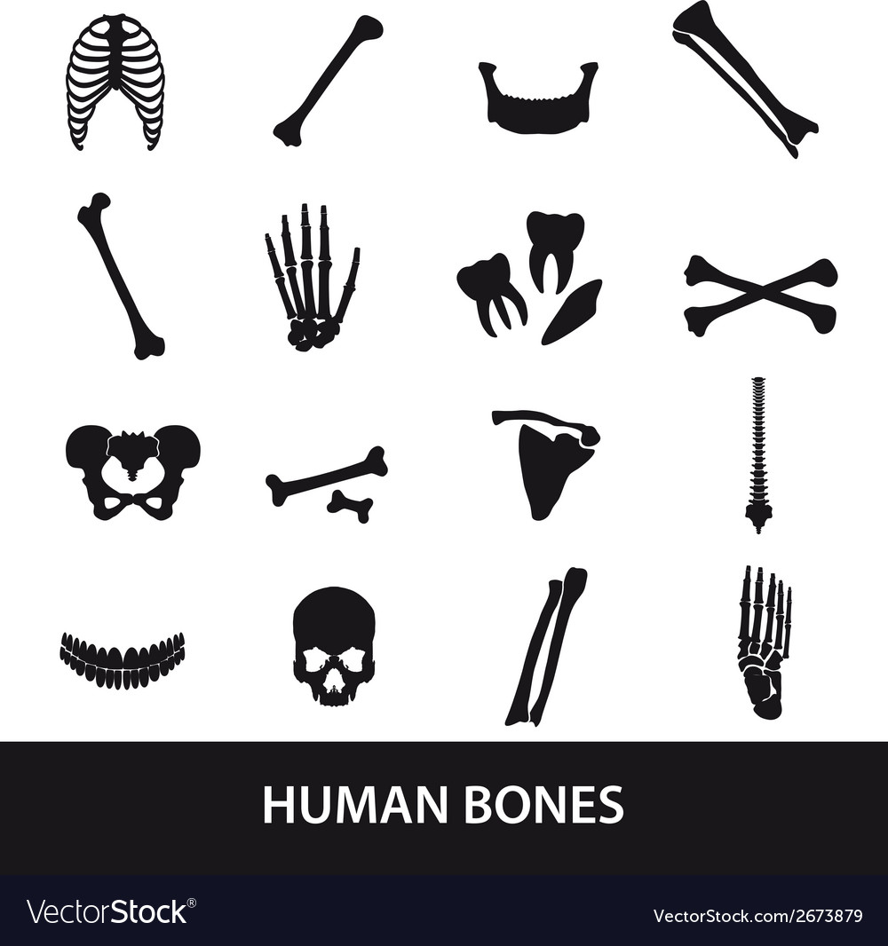 Human bones set of icons eps10 vector | Price: 1 Credit (USD $1)