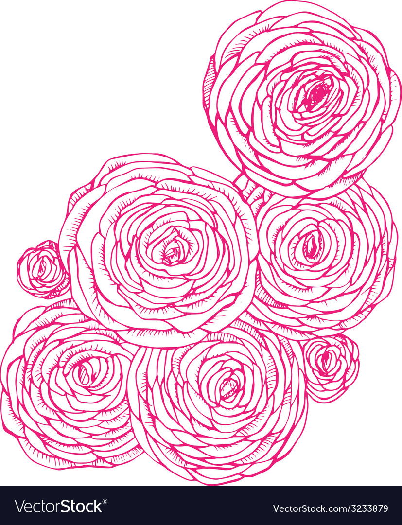 Ranunkulyus flowers sketch vector | Price: 1 Credit (USD $1)