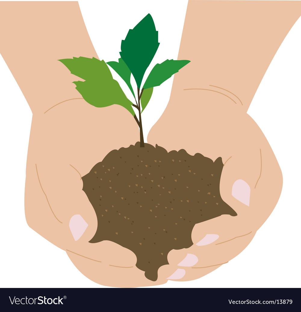 Seedling vector   Price: 1 Credit (USD $1)