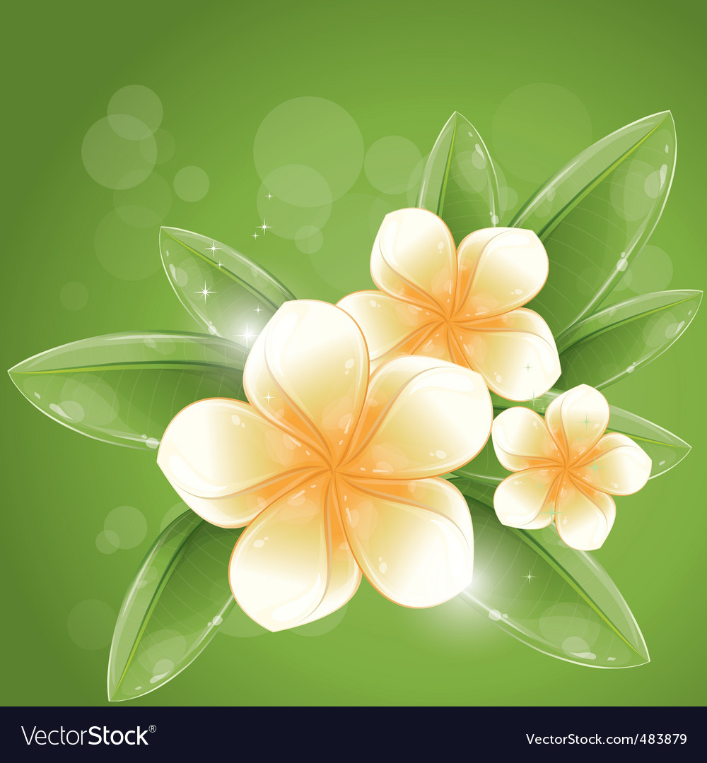 White frangipani flowers vector | Price: 1 Credit (USD $1)