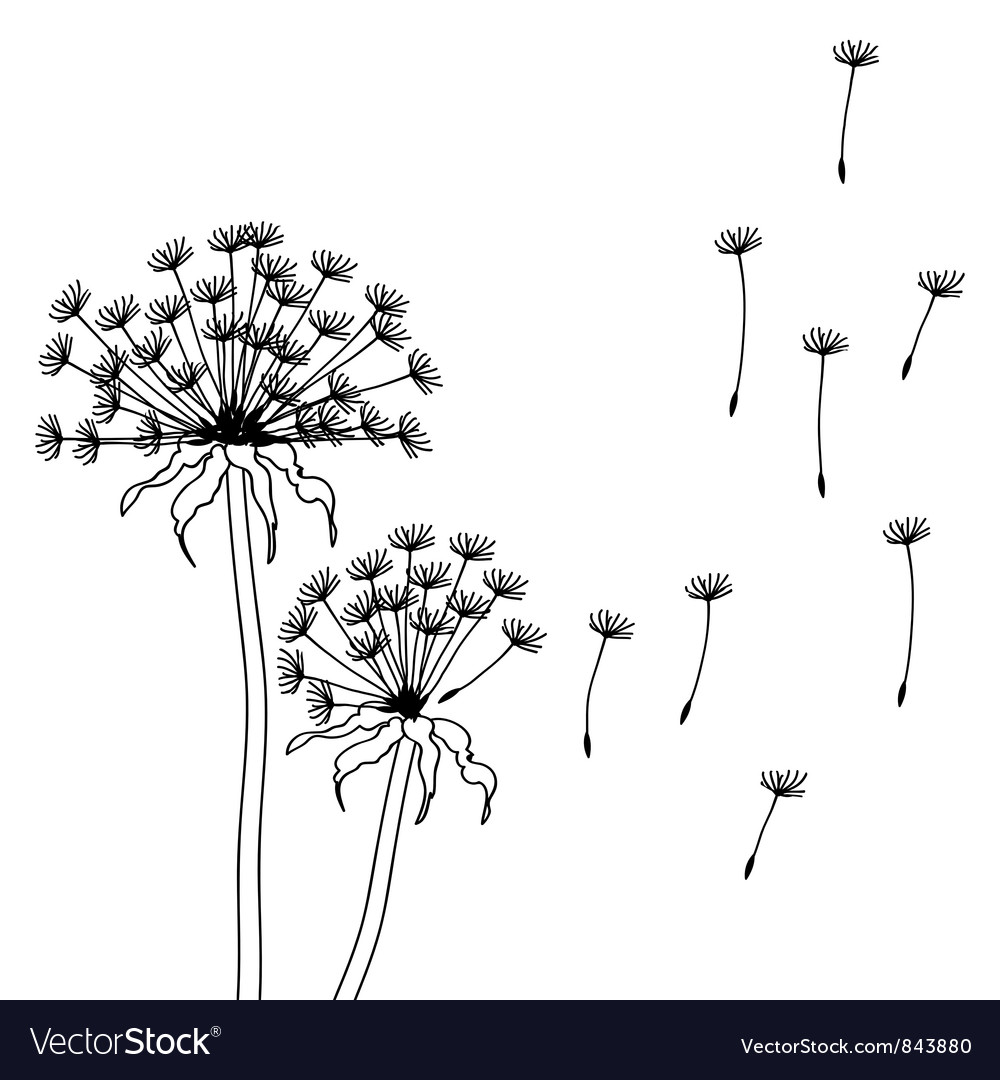 Dry dandelion flowers - abstract vector | Price: 1 Credit (USD $1)