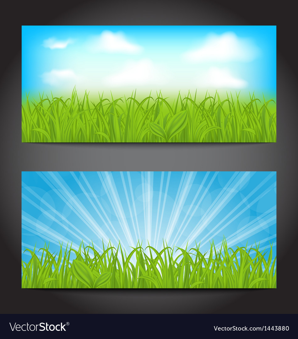 Set summer cards with grass natural backgrounds vector | Price: 1 Credit (USD $1)