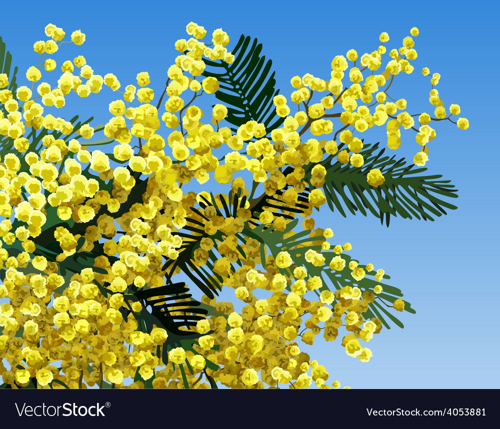 Mimosa flower vector | Price: 3 Credit (USD $3)