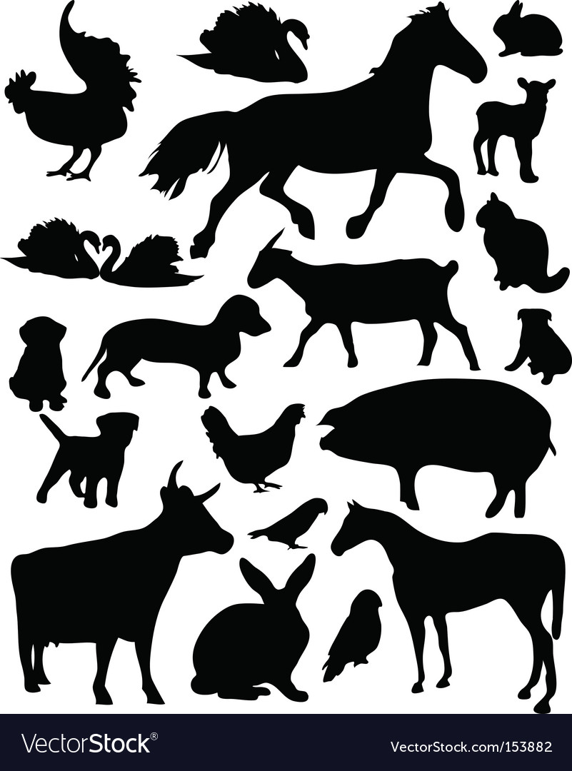 Domestic animals vector | Price: 1 Credit (USD $1)