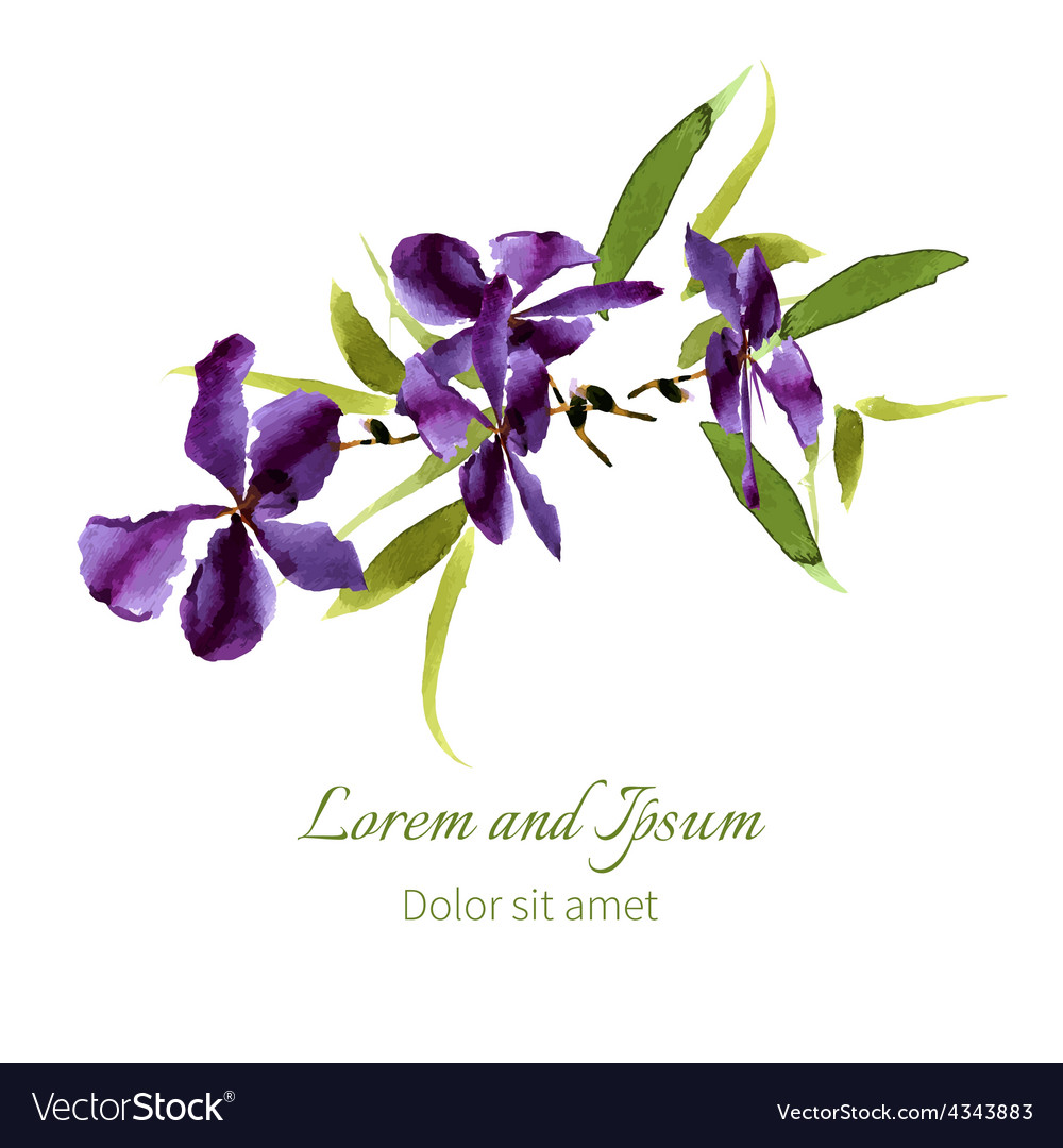 Iris watercolor can be used as greeting card vector | Price: 1 Credit (USD $1)