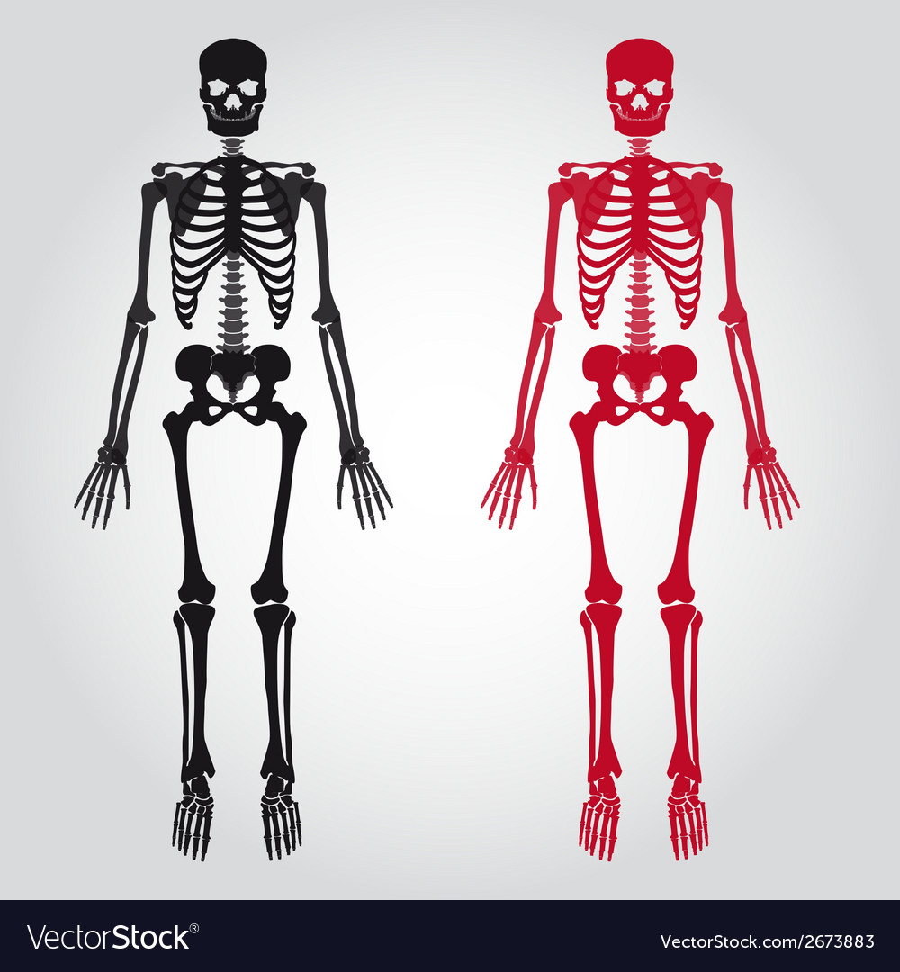 Skeletons - human bones set eps10 vector | Price: 1 Credit (USD $1)