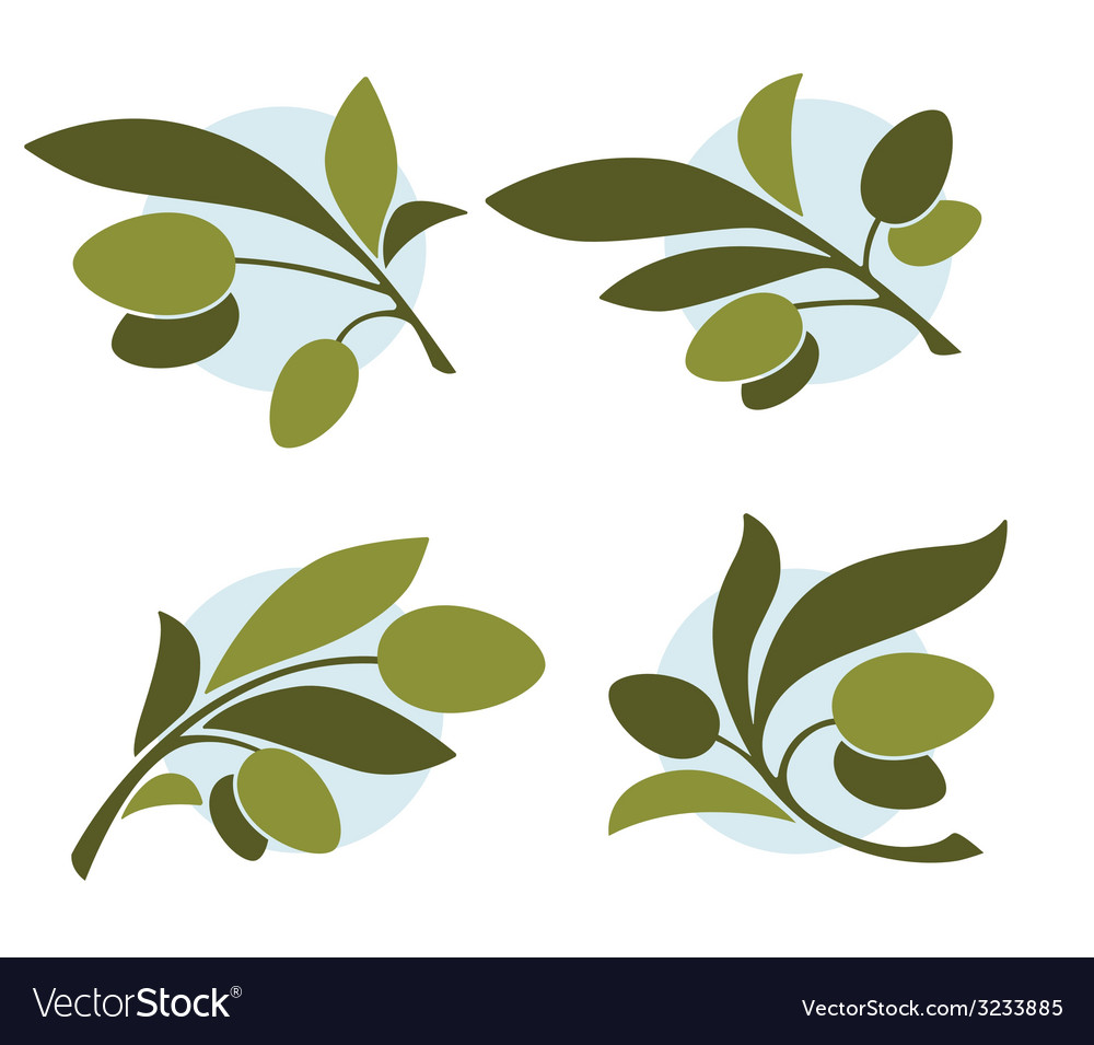 Green olive vector | Price: 1 Credit (USD $1)