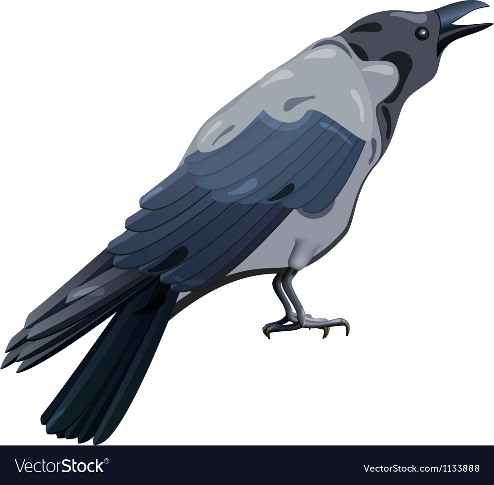 Hooded crow vector | Price: 1 Credit (USD $1)