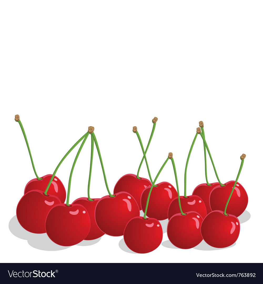 Ripe cherries vector | Price: 1 Credit (USD $1)