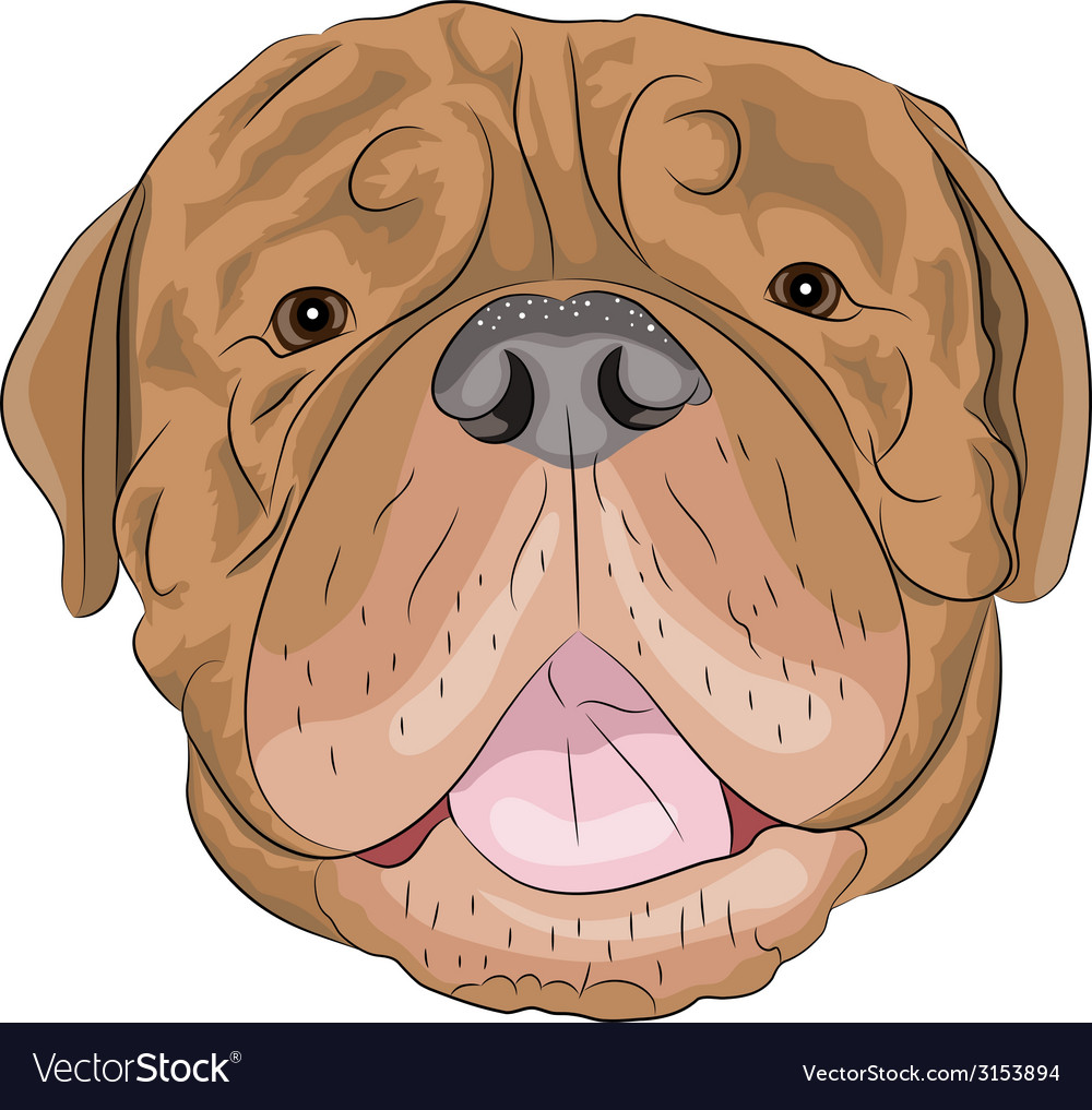 Dogue de bordeaux vector | Price: 1 Credit (USD $1)