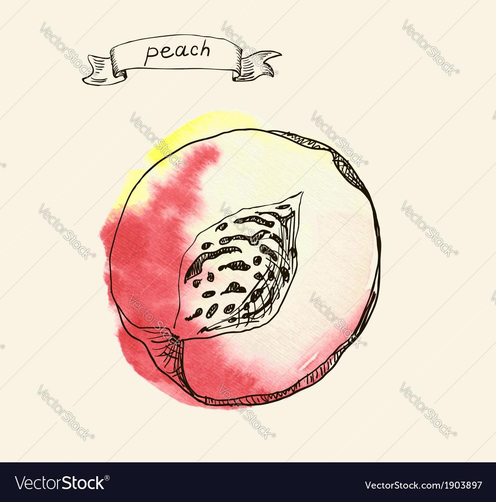 Peach sketch vector | Price: 1 Credit (USD $1)