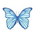 Butteerfly vector